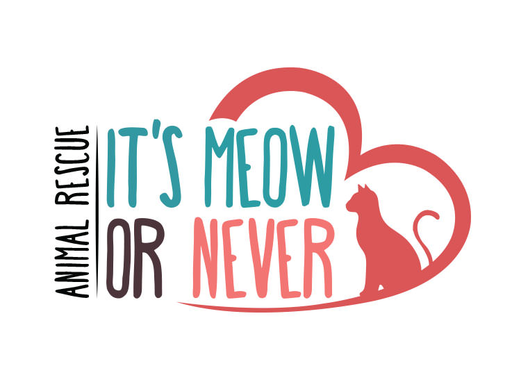 It's Meow Or Never